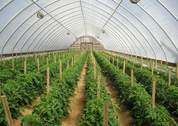 """Báo cáo chuyên đề """"Ứng dụng công nghệ sinh học trong lĩnh vực Nông nghiệp ở Việt Nam"""""""