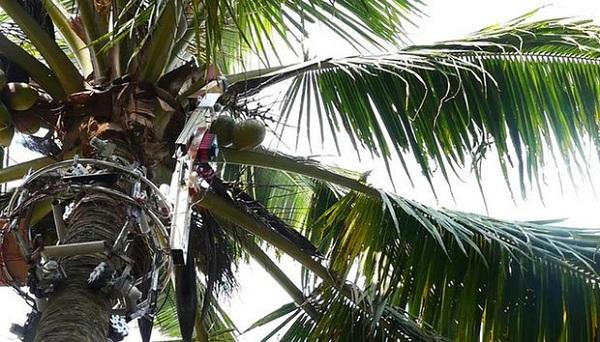 Phát triển thành công robot hái dừa